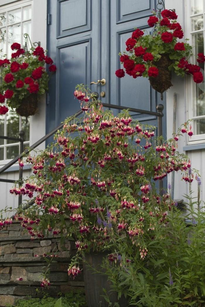 gartenpflanzen geranie dekoriert den eingang