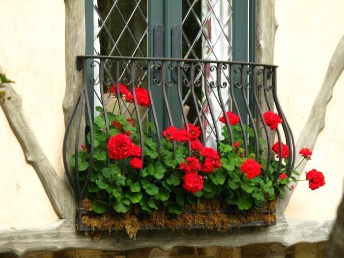 gartenpflanzen geranie für die balkonbepflanzung