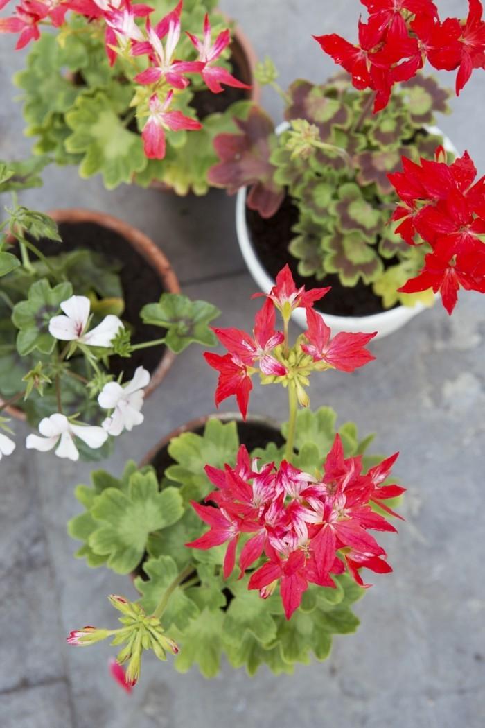 gartenpflanzen in blumentöpfen als dekoidee für den garten und den balkon