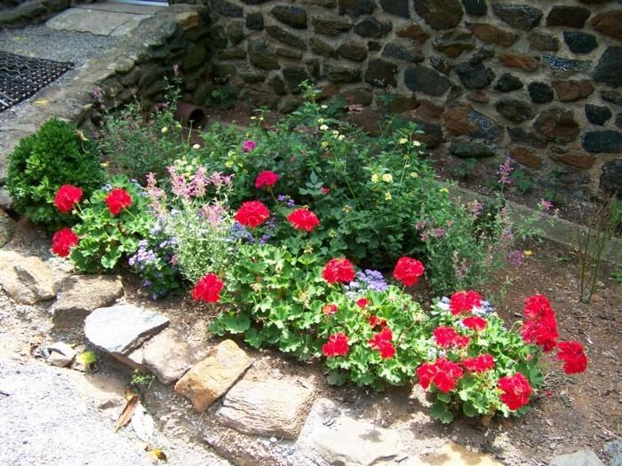 geranien blumenbeete im garten mit steinen dekorieren