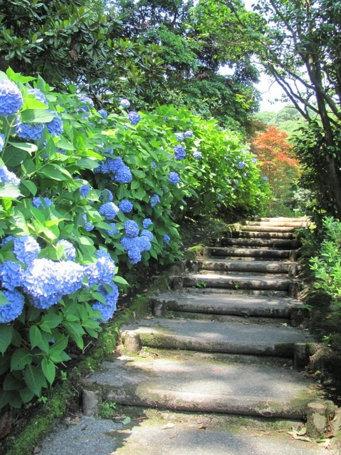 hortensien als hingucker im außenbereich