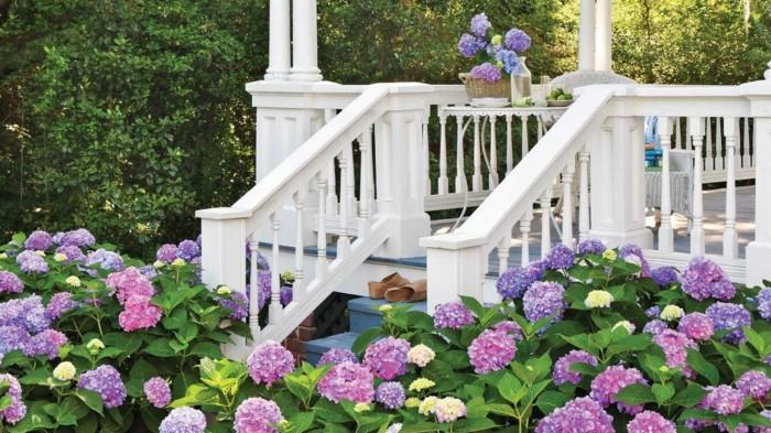 gartenpflanzen hortensie im außenbereich bringt farbe und freude