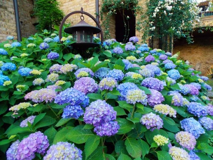 hortensien garten gestalten mit schönen gartenpflanzen