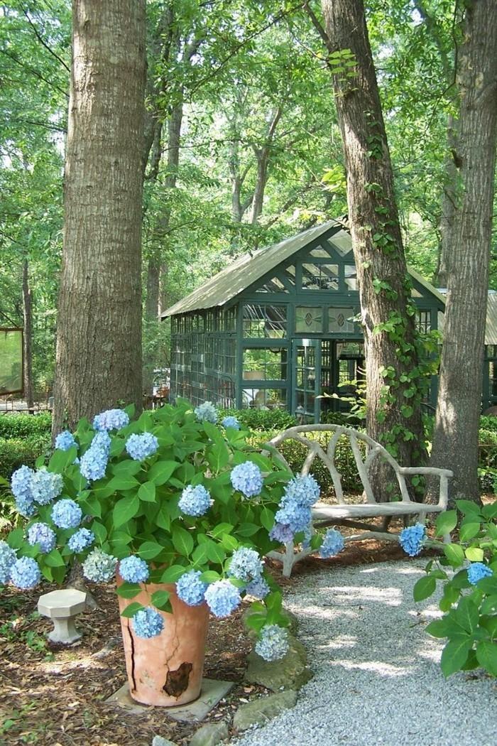 hortensien im blumentopf verschönern den außenbereich