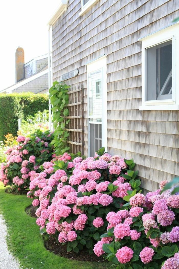 hortensien in rosa verschönern den außenbereich