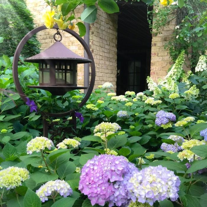 hortensien in verschiedenen farben dekorieren den außenbereich