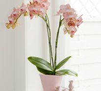 Orchidee – Pflegehinweise und nützliche Infos über die Königin der  Zimmerpflanzen
