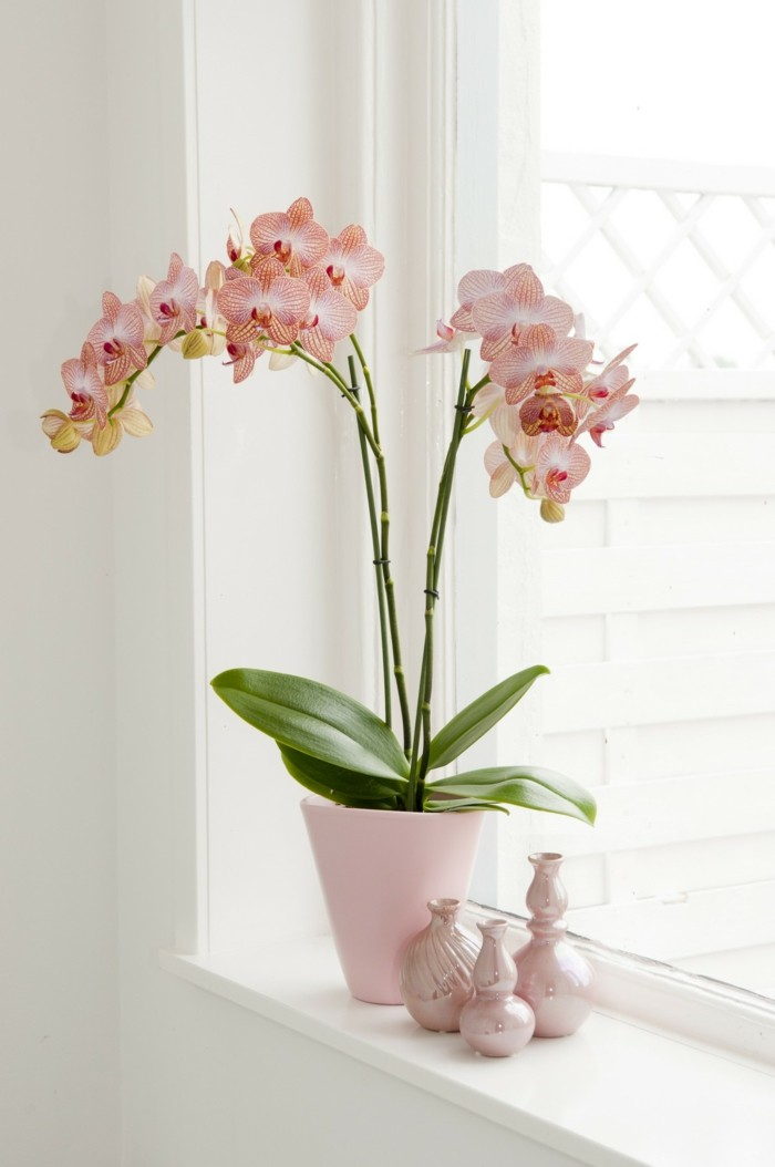 orchidee als deko für die fensterbank