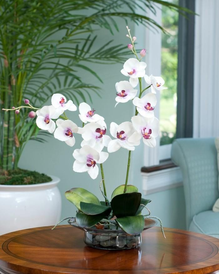 orchidee als deko im wohnzimmer und im büro