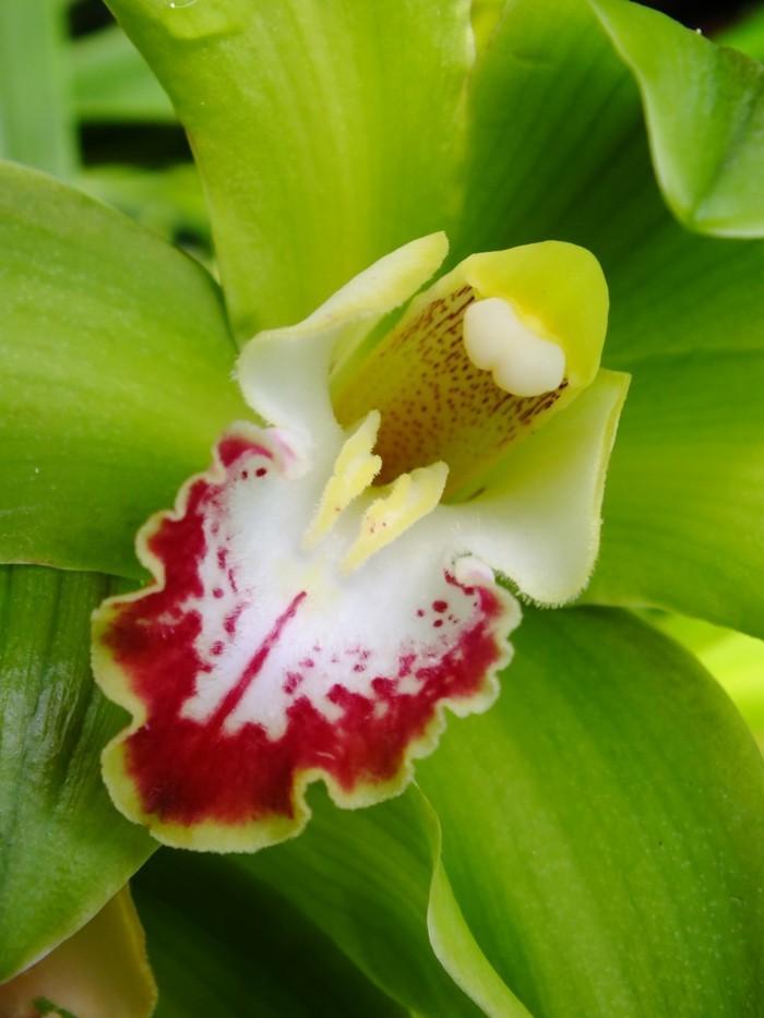 orchidee arten wunderliche blüten