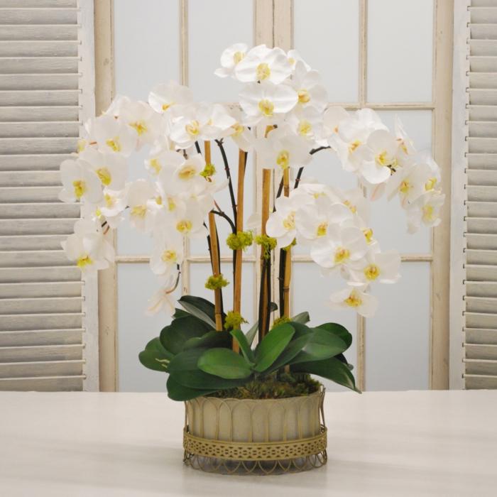 orchidee im blumentopf ist eine tolle dekoration für das wohnzimmer