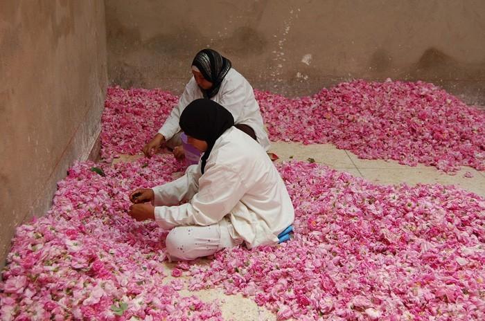 rosenöltradition blutenblatt verlesen