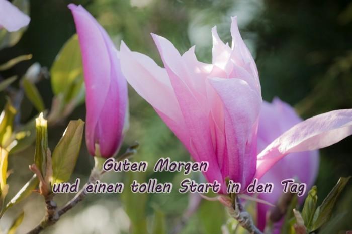 grusskarte guten morgen magnolien blueten
