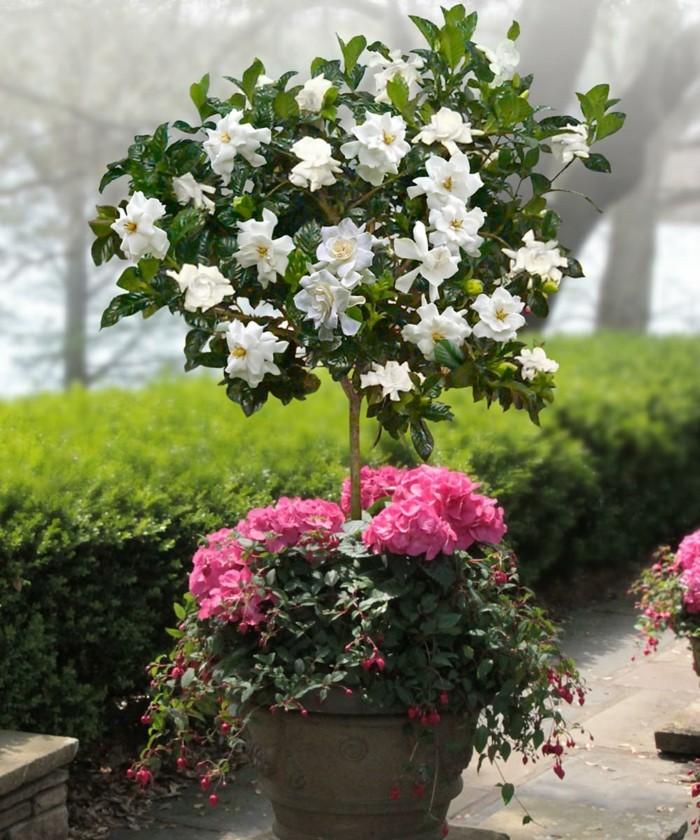 solitärpflanzen als schöne gartendeko in einem wohnlichen außenbereich