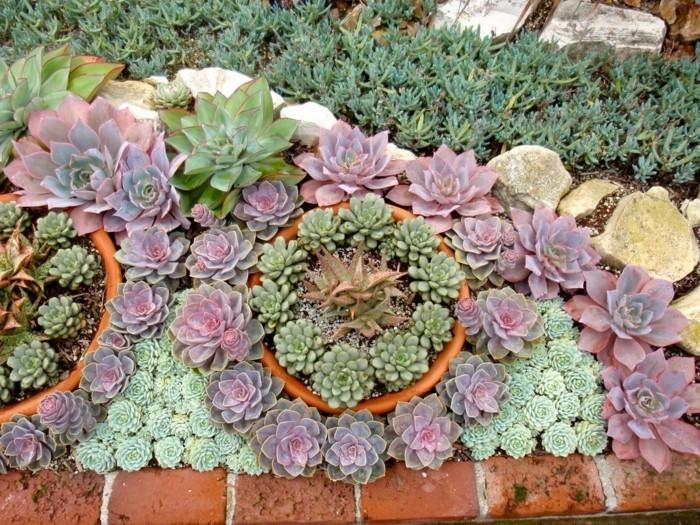 sukkulenten arten dekoideen mit pflanzen für den außenbereich