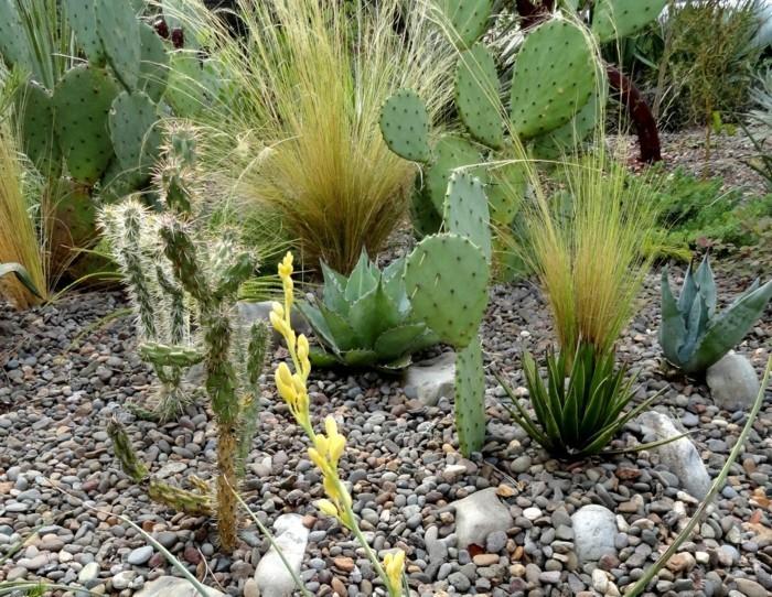 sukkulenten arten die man im garten züchten kann