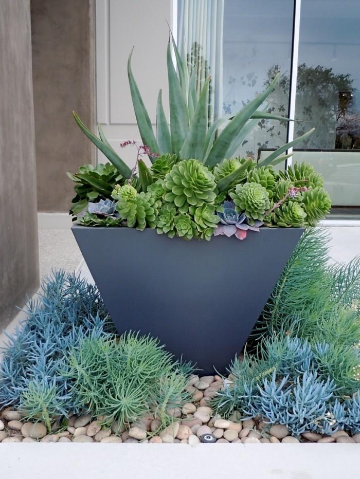 sukkulenten arten steine und stilvolle pflanzenbehälter verschönern den garten