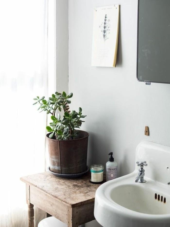 sukkulentenarten als dekoration zu hause geldbaum im badezimmer