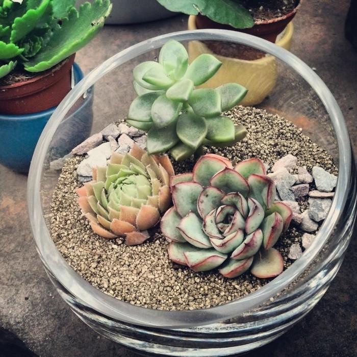 sukkulentenarten für zuhause terrarium für die wohnungsdekoration