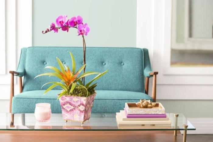 zimmerpflanzen dekoideen mit orchideen