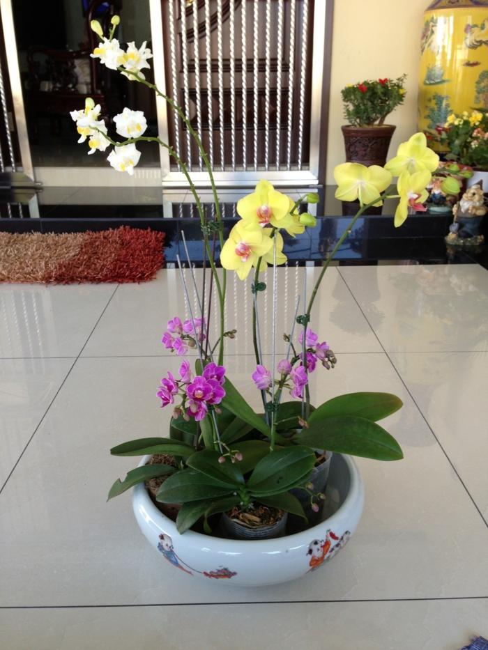 zimmerpflanzen die orchideen zusammen ordnen