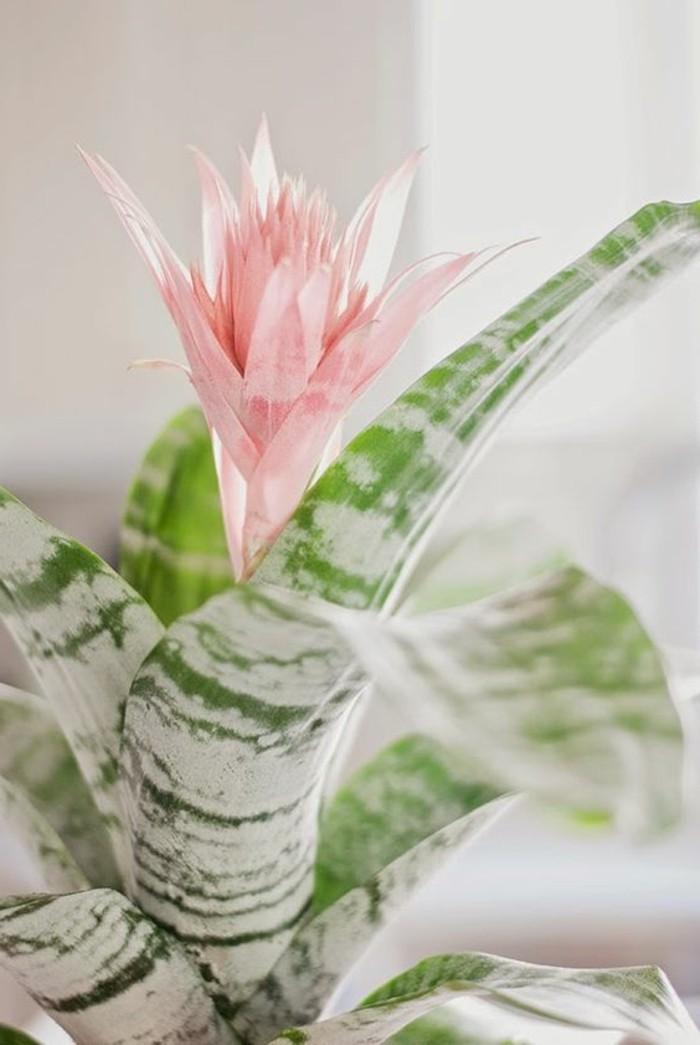 zimmerpflanzen mit wunderschönen blüten bromelia