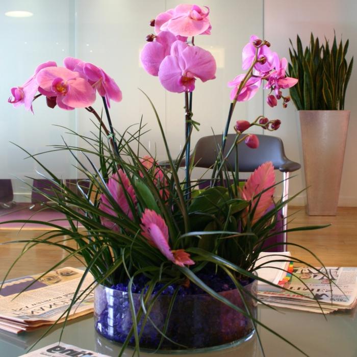 zimmerpflanzen orchideen als schöne hingucker