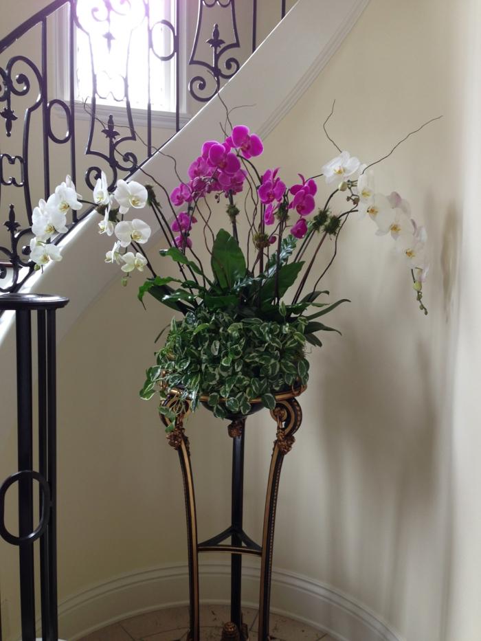 zimmerpflanzen orchideen im flur