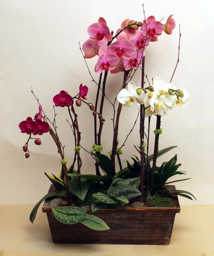 zimmerpflanzen orchideen in rot