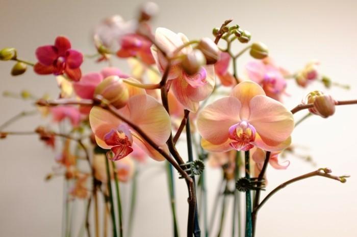 zimmerpflanzen orchideen in wunderschönen orange nuancen