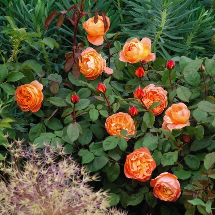 Emma Hamilton mit orangen blüten