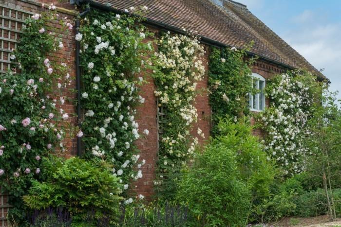 tolle fassade mit englischen rosen