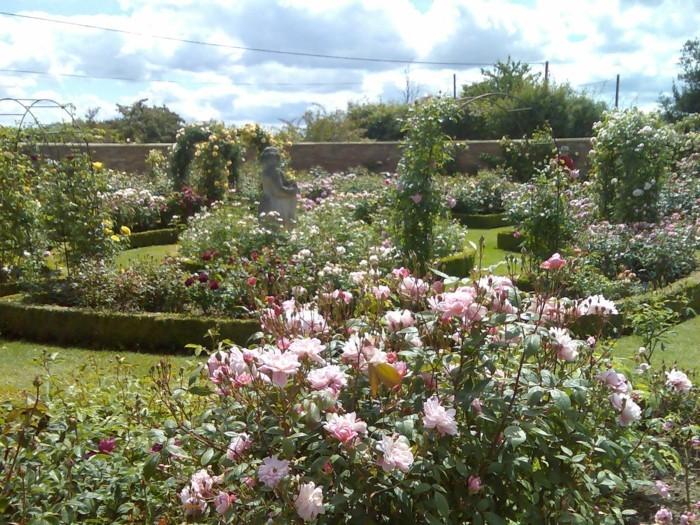 The Generous Gardener kletterrose unterschiedlicher einsatz