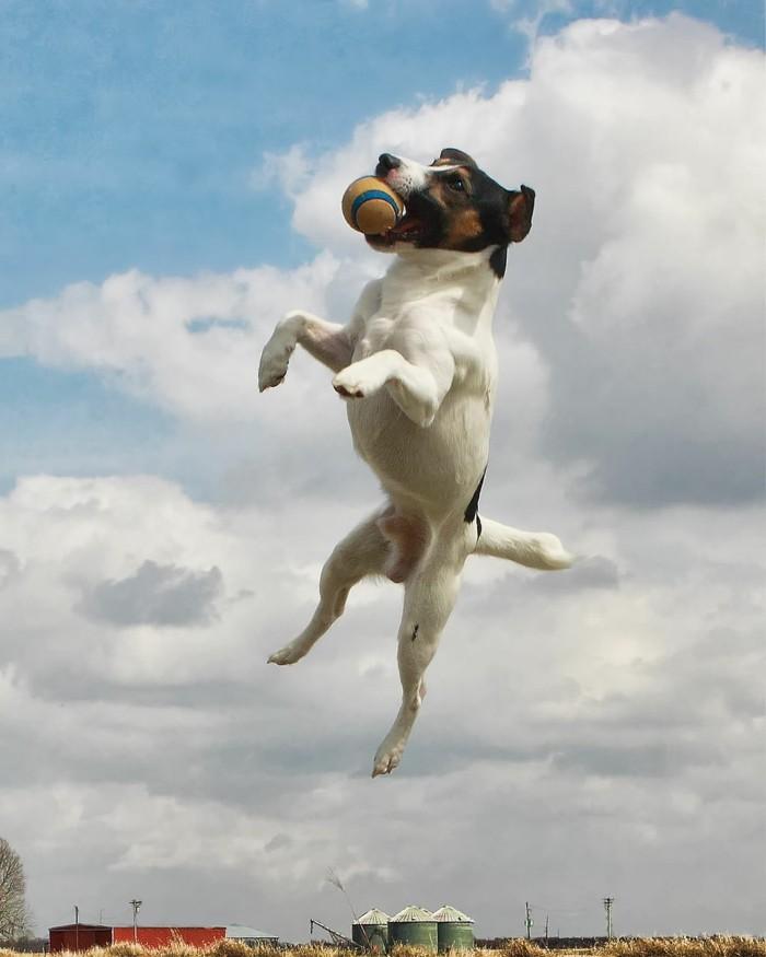 beliebte hunderassen jack russel terrier 3