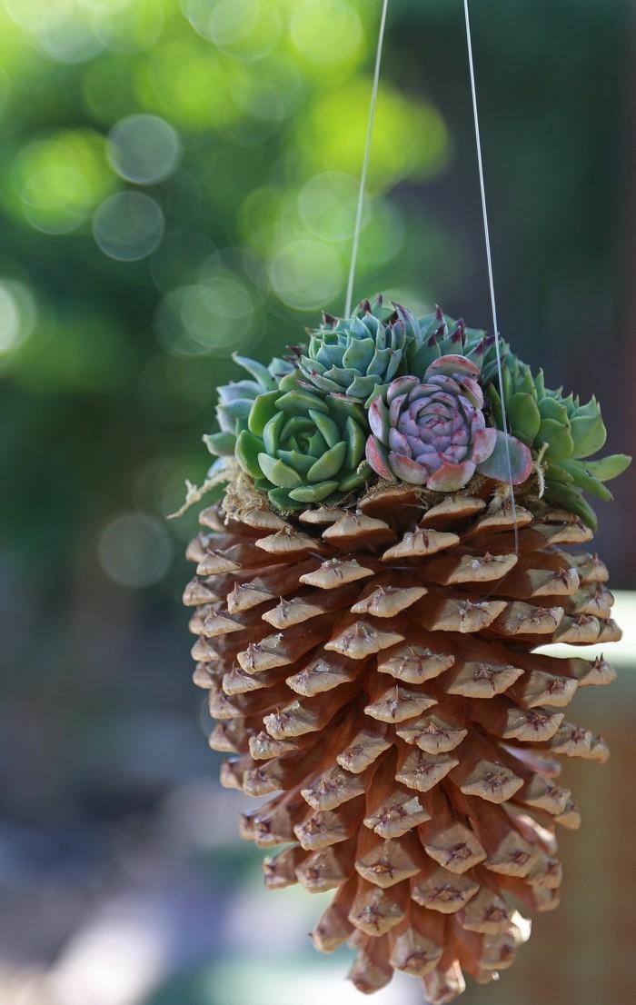 deko selber machen zapfen und sukkulenten aufhängen