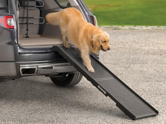 einstieghilfe für hünde reisezubehör urlaub mit hund