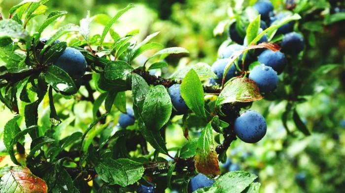gartenarbeit früchte sammeln nach den mondphasen