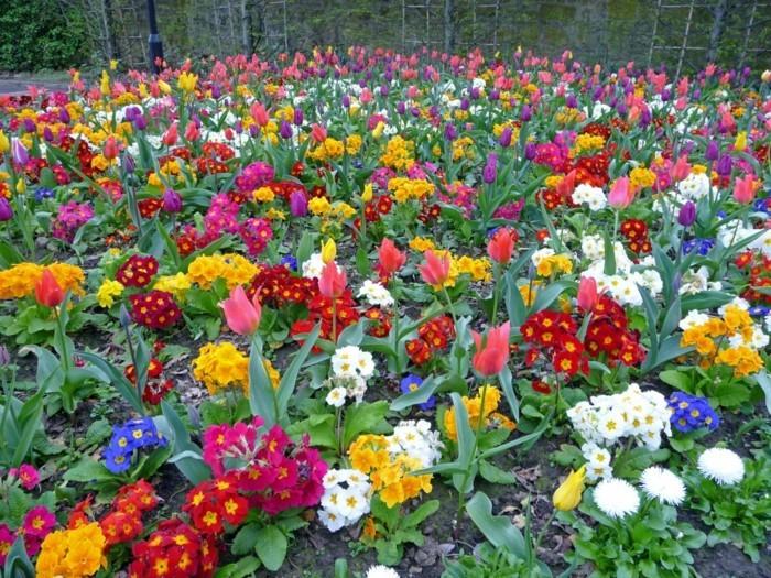 grüner garten mit farbigen blüten