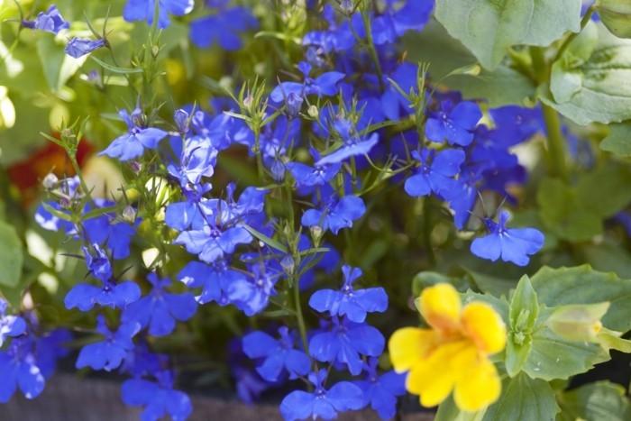 blaue blumen und gelbe