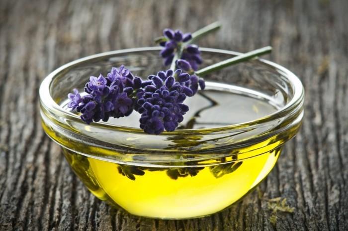 lavendelöl lavendel pflanze