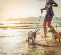 Urlaub mit Hund: Was sollten Sie dabei beachten?