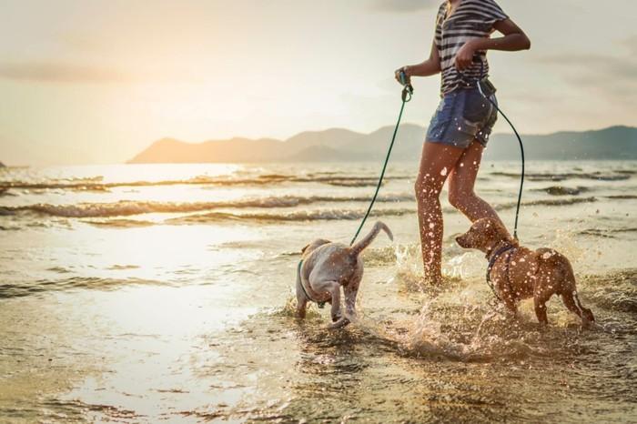 meeresurlaub mit hunden hundestrand