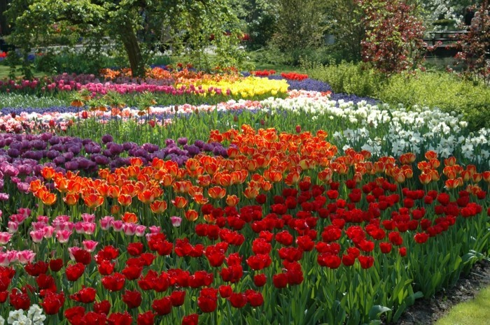 mehrere verschiedene tulpen