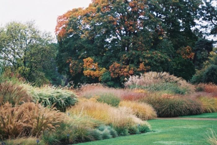 naturgarten mit vielen farben