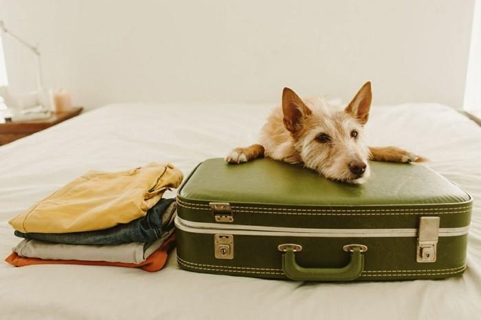 reisen mit hund koffer packen hundezubehör