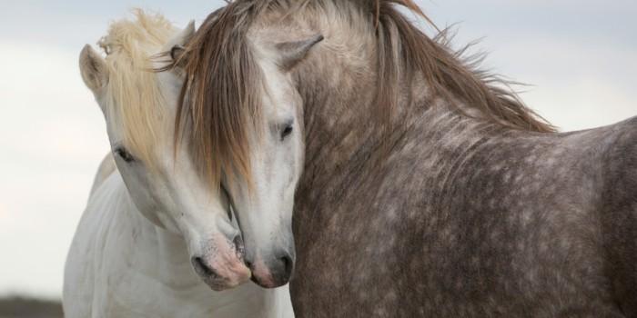 schmuck aus pferdehaar ohrringe set pferde