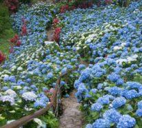 5 Gartenblumen, die auch im Herbst herrlich weiterblühen