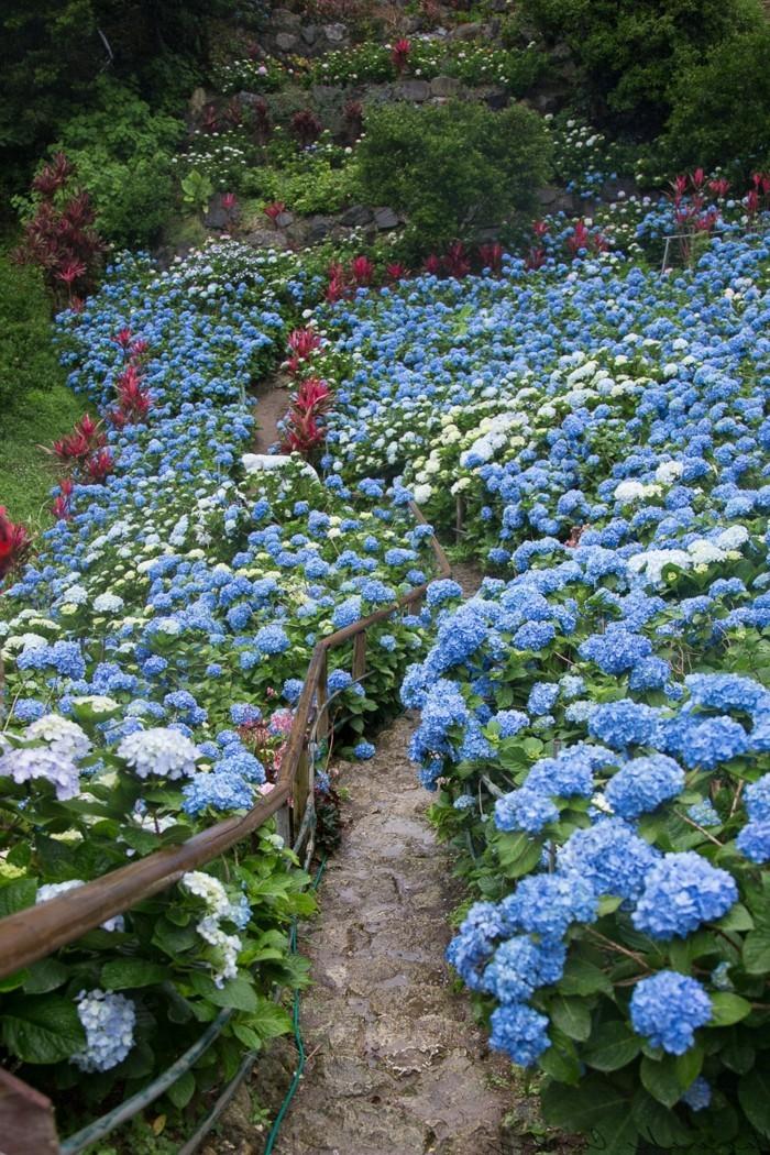 gartenblumen blaue hortensien erfischen den außenbereich