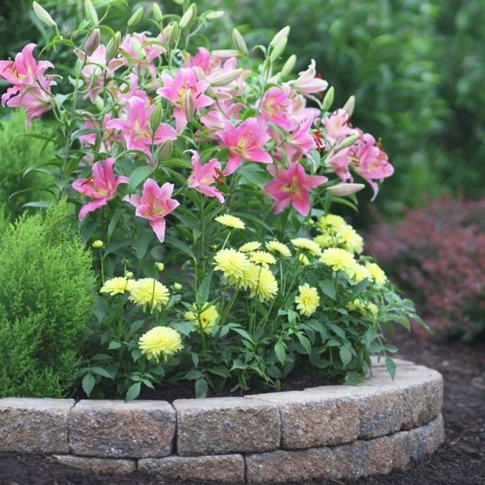 gartenblumen die auch im herbst blühen die dahlie