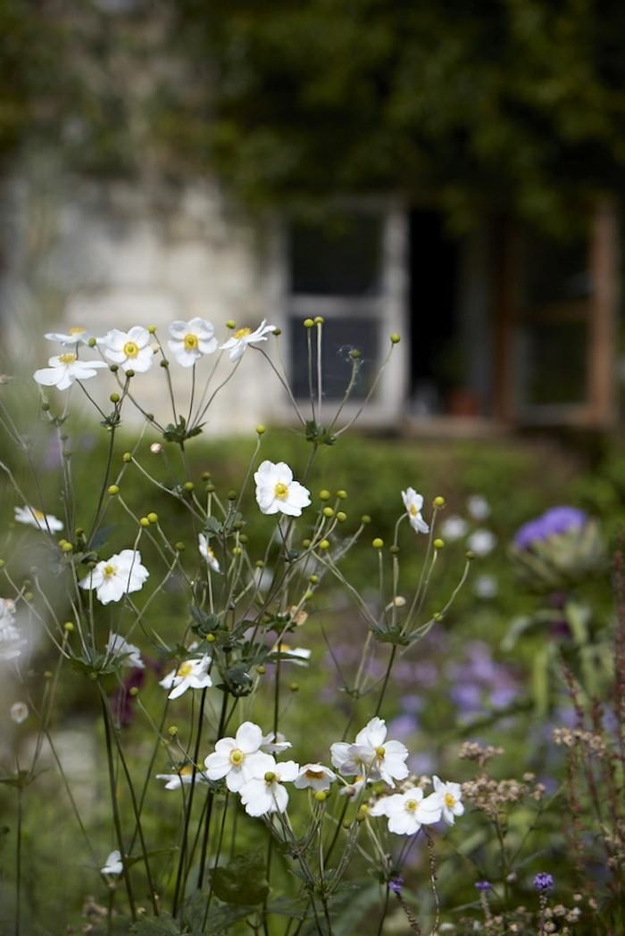 gartenblumen weiße herbstanemonen peppen den garten auf